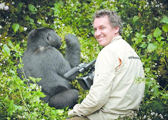 Berggorilla [Gorilla beringei beringei], Bwindi Impenetrable National Park, Uganda, Afrika |mountain gorilla [Gorilla beringei beringei], Bwindi Impenetrable National Park, Uganda, Africa|