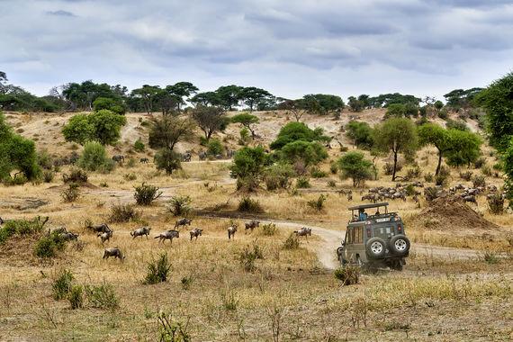 Tarangire-Nationalpark, Tansania, Afrika |Tarangire National Park, Tanzania, Africa|