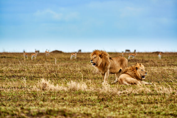 Serengeti Nationalpark, UNESCO Weltnaturerbe, Tansania, Afrika |Serengeti National Park, UNESCO world heritage site, Tanzania, Africa|