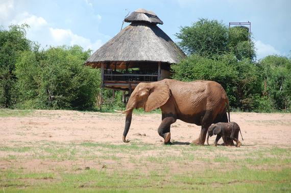 www.rhinosafaricamp.com
